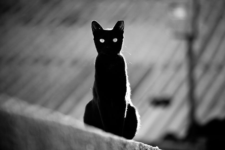 美联储的猫
